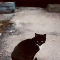 Кошка по имени Кошка :: Катерина Пестовская