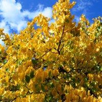 Autumn :: Vana Harutyunyan