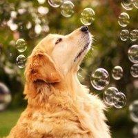 пузырьки :: Верка Хренова