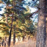 В лесу :: Kate Owl
