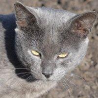 Угрюмый кот :: Владимир Васильев
