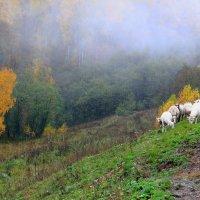 горное пастбище :: Pavel King