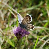 Последние в этом году бабочки)) :: Ольга Погорина