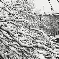 снег :: Darja Bobkova