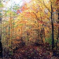 осінь :: lena kutsin