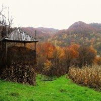 осінній город :: lena kutsin