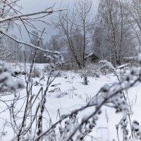 Зимний лес :: Traveller .