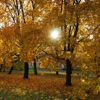 Золотая осень. :: Vladimir