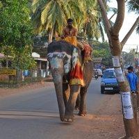 Индия. Живописный слон :: Владимир Шибинский