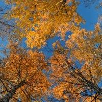 Деревья. Осенний калейдоскоп :: Елена Данилина