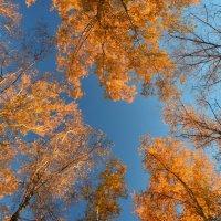 Деревья.Осенний калейдоскоп :: Елена Данилина