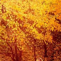 Вот и осень пришла... :: Елена Зимина