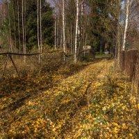Октябрь :: Игорь Хохлов