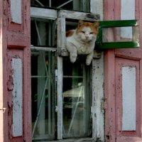Просто кот. Просто отдыхает. :: Анатолий Герасимов