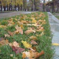Осенняя грусть... :: Лена L.