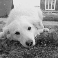 собака :: Юлия Богданова
