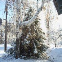 Соседи :: Анна Ивлиева