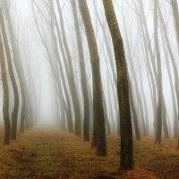 Осенний лабиринт :: Valery Penkin