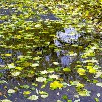 Отражение в воде :: Юрий Стародубцев