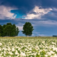 Алтайские поля :: P. Blum