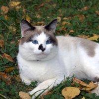 Кошка на осенней траве :: Виктор Сухарев