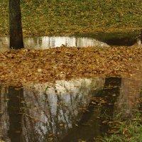 Осень в Парке. :: Михаил