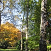 Осень :: Olga Taube
