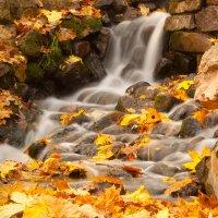 Осенний ручей :: Диана Матисоне