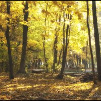 Осень :: Александр Горбачев