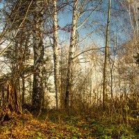 Осень :: Вадим Губин