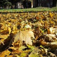 Пожухли листья на дворе... :: Мэрин Дюбо