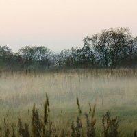 Заря, предрассветный туман. :: Сергей Калиновский
