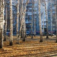 Деревья :: Света Кондрашова