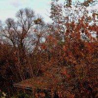 forever autumn :: Юлия Денискина