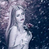 Роза в снегу :: Татьяна