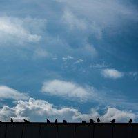 Опять весна и голуби на крыше... :: Мила Солнечная