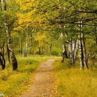 Осень :: Алексей Морозов