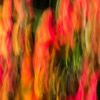 Краски осени :: Виктор Готлиб