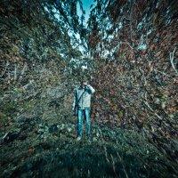 в лесу ... :: Евгений Мадзинов
