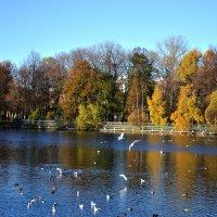 Солнечный осенний день в городском парке :: Irina Sergeeva