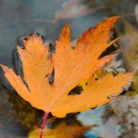 Осень :: Евгений Хаустов