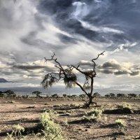 Вид на Килиманджаро :: Игорь Белов