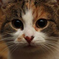 Кошка Дашка :: Таня Байдина