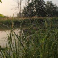Утро на реке :: Лариса