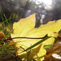 Солнечная осень... :: Катюшка Пескова