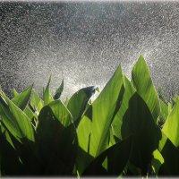 Летний дождь :: Лариса