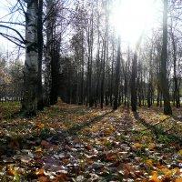 Ковёр листопадный :: Юрий Митенёв