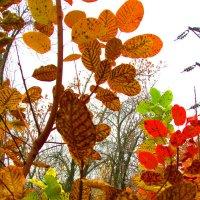 последние осенние листья :: Marina Timoveewa