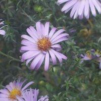 Цветок :: Маргарита Макаревич