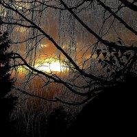 В паутине ветвей или Изморозь :: Нина северянка